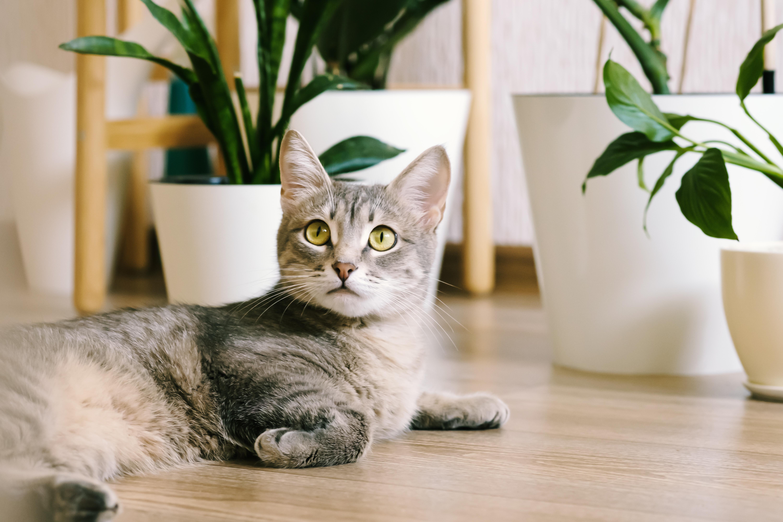gato deitado no chão ao lado de vasos de plantas