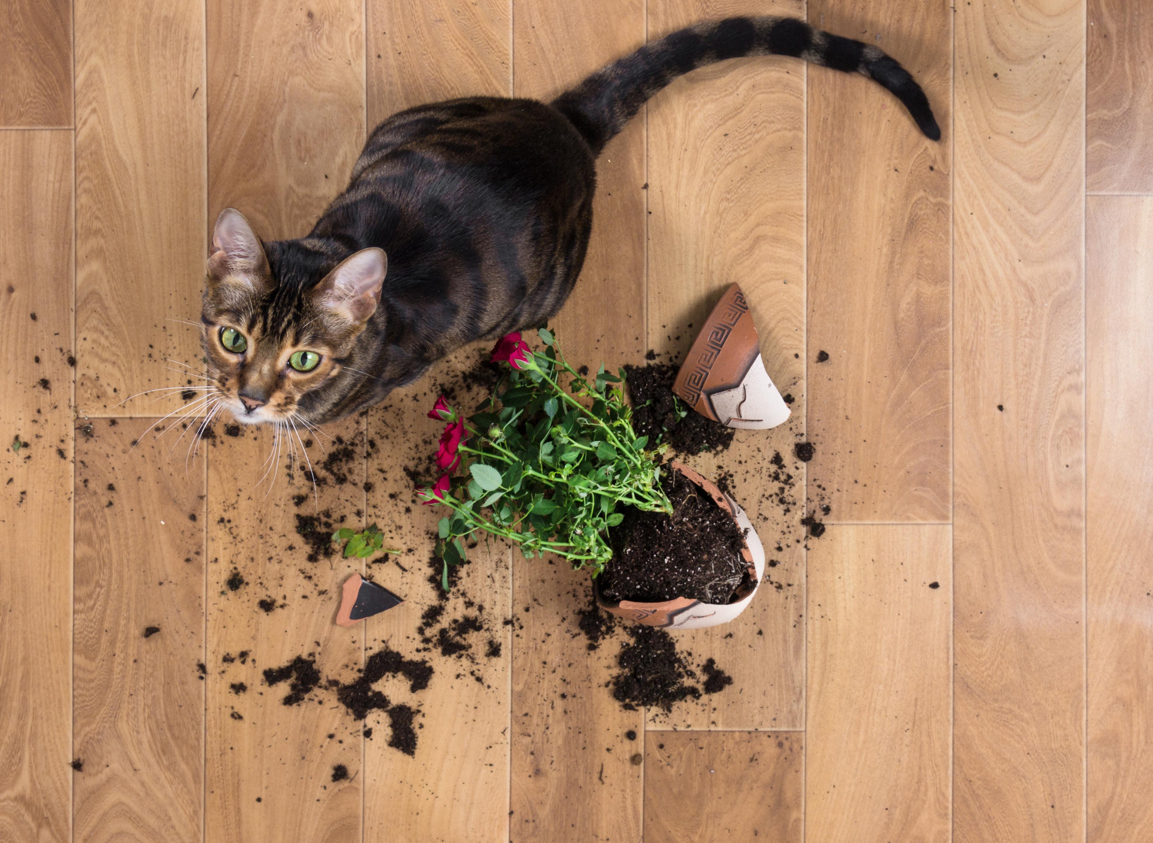 gato-derruba-vaso-de-flor-que-quebra-no-chão